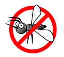 Mosquito2June2013