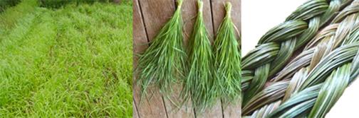 Sweetgrass10
